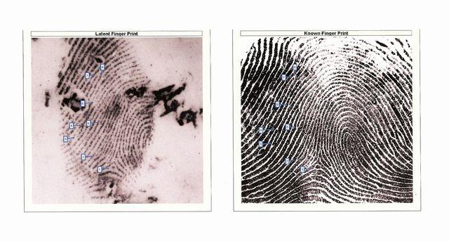 Palm Print Matches Fingerprint